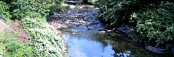 DEC And Health Department Statement On Salmon Creek And ...